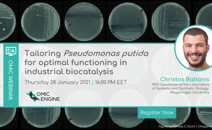 Tailoring Pseudomonas putida for optimal functioning in industrial biocatalysis